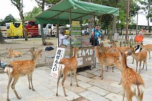 Day Trip To Nara Deer Feeding 101 My Suitcase Journeys