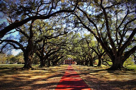 louisianas oak alley plantation