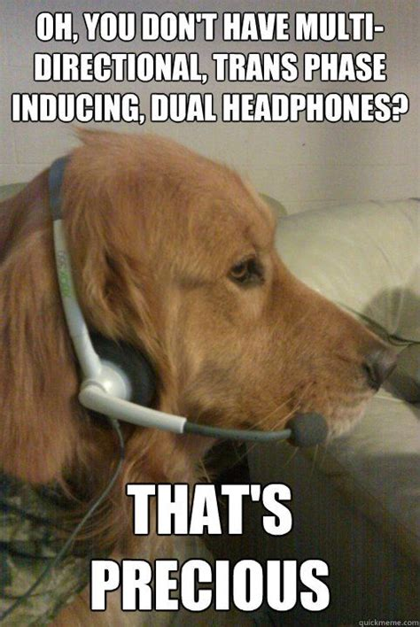 dogs  headset meme inducing dual headphones