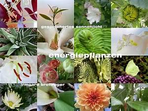 Feng Shui Garten Pflanzen : feng shui garten pflanzen excellent feng shui garten pflanzen ~ Bigdaddyawards.com Haus und Dekorationen