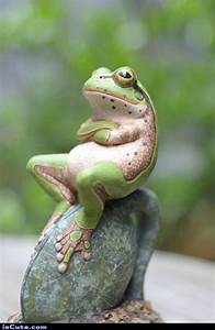40 Amazing Frog Pictures To Understand Them Better