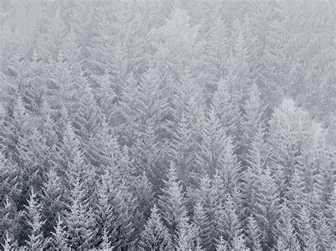 Winter Wallpaper Iphone 6 Plus