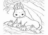 Bunny Coloring Pages Real Print sketch template