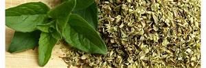 Salbei Einfrieren Oder Trocknen : unser blog auf tipps leckere rezepte ~ Orissabook.com Haus und Dekorationen