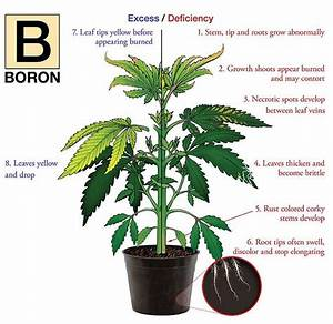 Discovery Of Boron