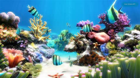 fond de bureau gratuit aquarium vivant pour fond dcran aquarium vivant pour fond