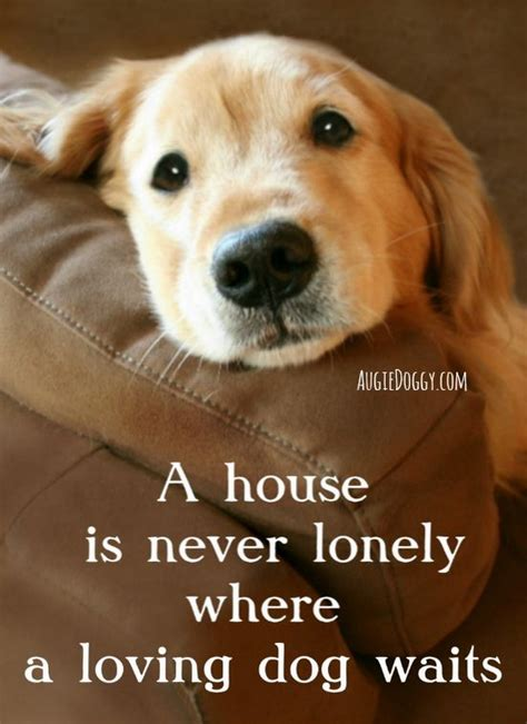 house   lonely   loving dog waits quote