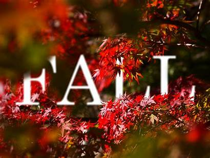 Fall Wallpapers Vector 4k Season Manipulation Backgrounds