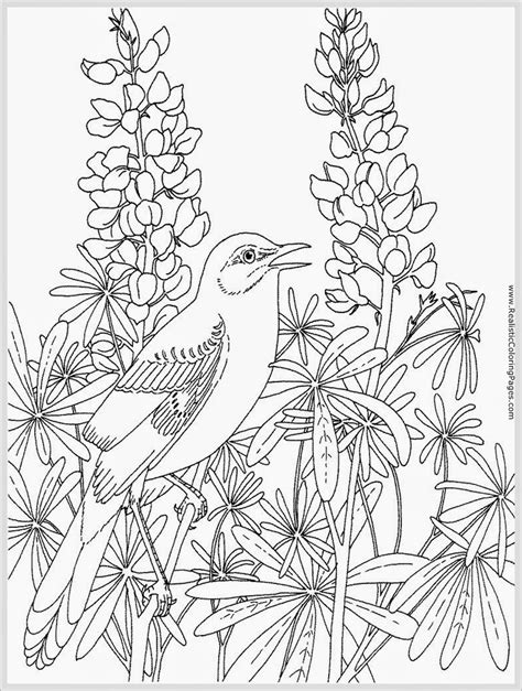 Realistic Coloring Pages For Adults at GetColorings com