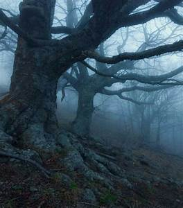 1000+ images about Trees on Pinterest   Trees, Winter ...