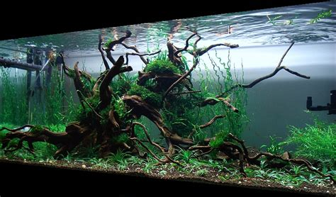 setup aquascape bubbles aquarium aquascapes tank setups projects