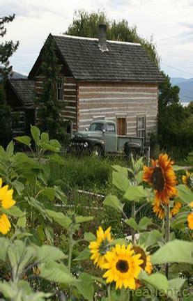 fakta terselebung tentang gambar bunga matahari pot