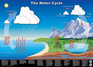 The Importance Of The Water Cycle