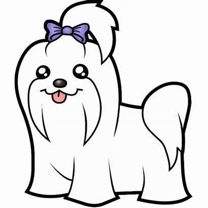 Maltese Cartoon Dog Dogs Bow Zazzle Cartoons