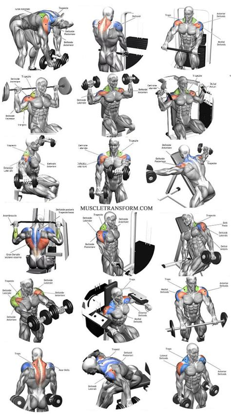 See more ideas about muscle names, workout, fitness tips. The Ultimate Shoulder Workouts Anatomy