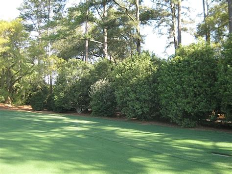 Hole 1 - Tea Olive | Horticulture at the Masters