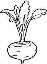 Beet Turnip Lettuce Coloring Line Pages Printable Salad Beetroot Drawings Kid sketch template
