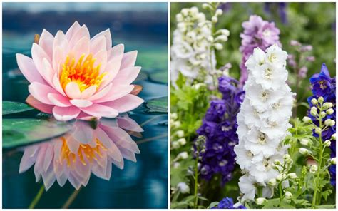 July Birth Flower Birth Month Flowers And Their Meanings Good Living Guide