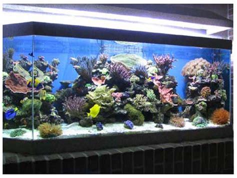une solution 233 cologique pour refroidir aquarium la g 233 othermie aquarium r 233 cifal aquarium