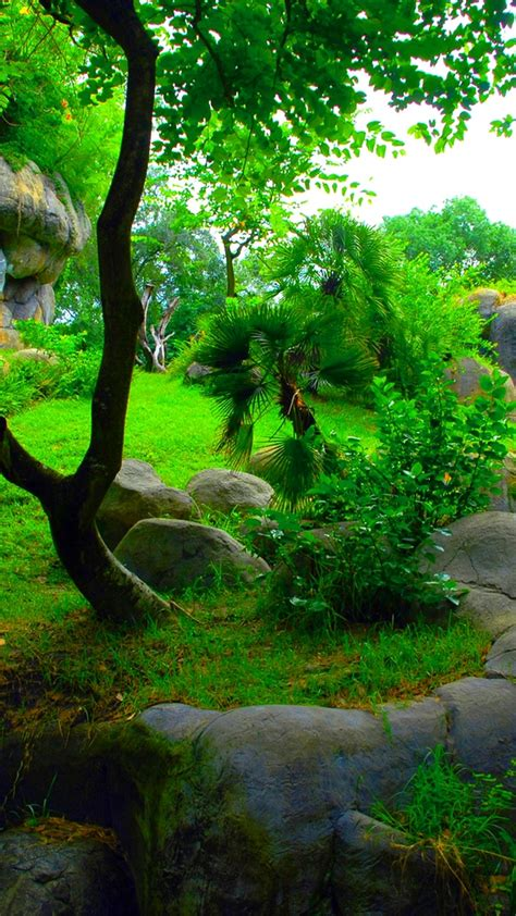 Download hd green backgrounds best collection. Wallpapers Phone Nature Green - 2020 Android Wallpapers