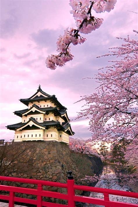 fonds decran japon chateau de hirosaki rose fleurs de