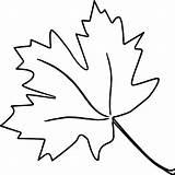Leaf Coloring Leaves Oak Maple Tropical Sugar Printable Drawing Getcolorings Autumn Pa Clipartmag Blank sketch template