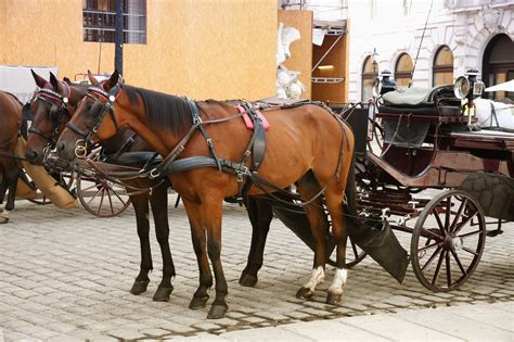 animals horse horses transportation need different mail austria carts don palace main yet carage delivery were fleet modes there