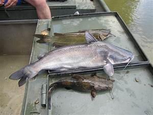 Kentucky Department of Fish & Wildlife Green River Pool 4 ...