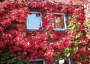 Haus Und Garten Stade : das gr ne haus wirkung der farben fassadengr n ~ Orissabook.com Haus und Dekorationen