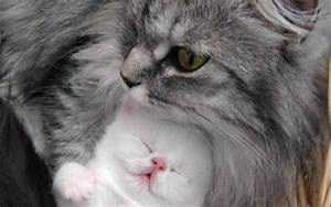 Pictures Of Beautiful Cats And Kittens - Pictures Of ...