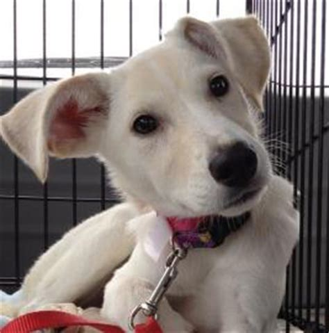 capital area humane society lansing mi animal shelter top 10 puppies adopt me faces of 2013 petfinder