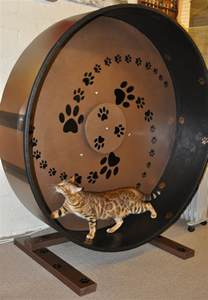 cat exercise wheel what s the right amount of exercise for your pet