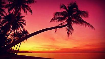 Chillhop Summer Beat Sunset Palm Tree Trackblasters