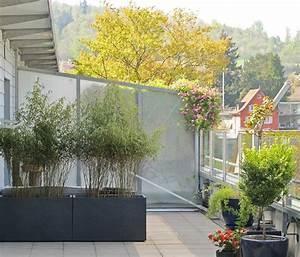 bambuspflanzen als sichtschutz pflanze als sichtschutz With französischer balkon mit bambus im garten pflanzen