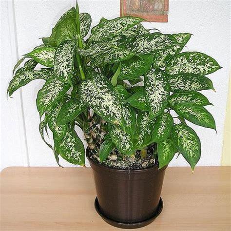 plantes pour bureau quelles plantes pour le bureau liste ooreka