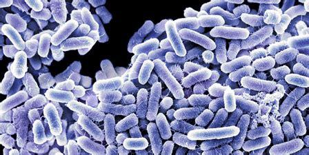 Desconversa  Tudo Sobre Fotossíntese E Quimiossíntese
