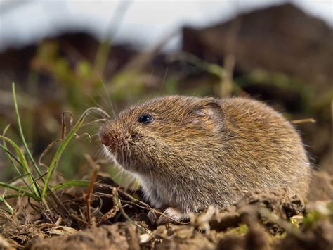 How To Id And Kill Gophers