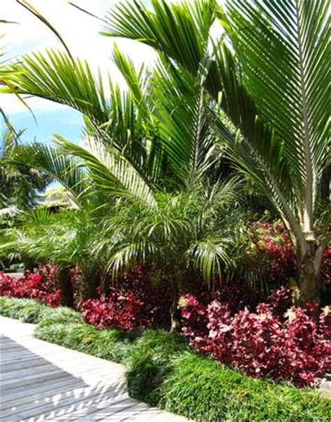 layered sub tropical palm garden seed landscapes garden
