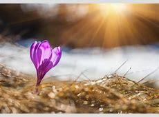 Spring Equinox – Vernal Equinox, Southern & Northern