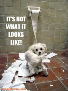 funny dog pictures  quotes funny dog picture puppy