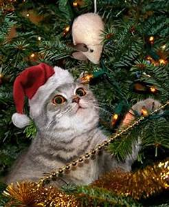 Cats and Dogs and Christmas Trees on Pinterest