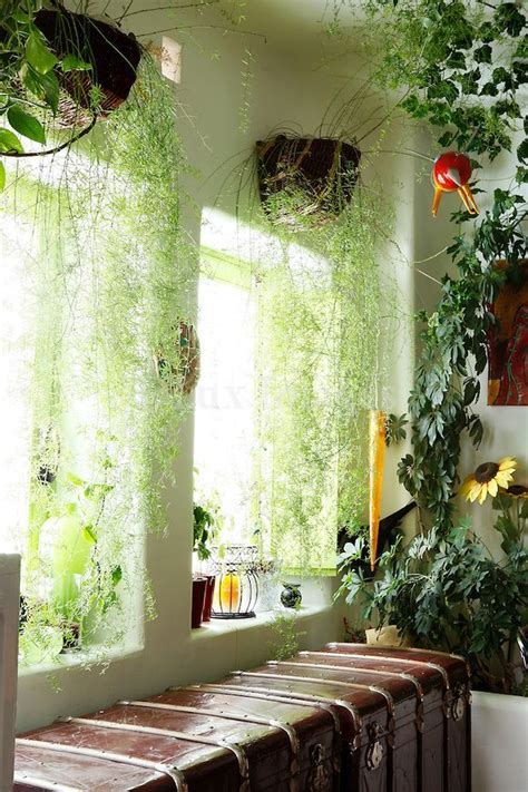 hanging plant curtains room  plants indoor window