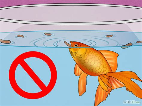 swim bladder disease how to fix swim bladder disease in goldfish