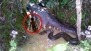 Top 10 Biggest Snakes That Ever Existed - Exploredia