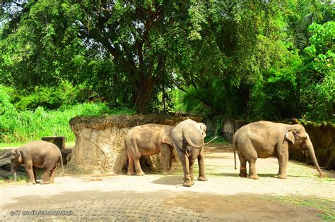 bali safari marine park bali attractions
