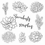 Illustration Coloring Succulents Vector Graphics Clipart sketch template