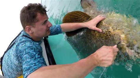 teeth grouper goliath