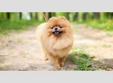 Who's Who of the Small Dog Breeds Petfinder