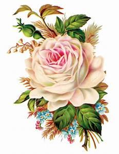 Clip Art: Royalty Free Gorgeous Vintage Rose Image - Free