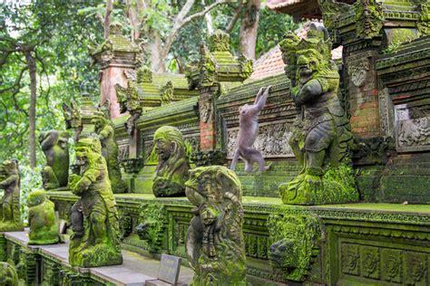 ubud monkey forest nature reserves   monkeys